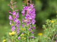 Flora around Lower Multyn Lake