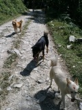 our companions for the first day of the trek