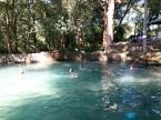 swimming pool in the jungle