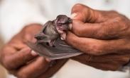bats at Linno Cave