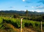 Inle Vineyard