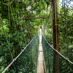 above the trees: canopy walk