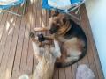 Jaime's lovely dogs: Negrita and Ayke