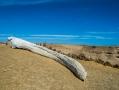 whale's jaw bone